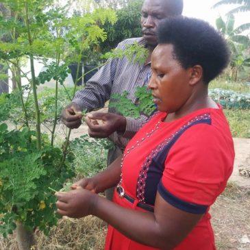 De Moringaboom: een boom die levens kan redden.